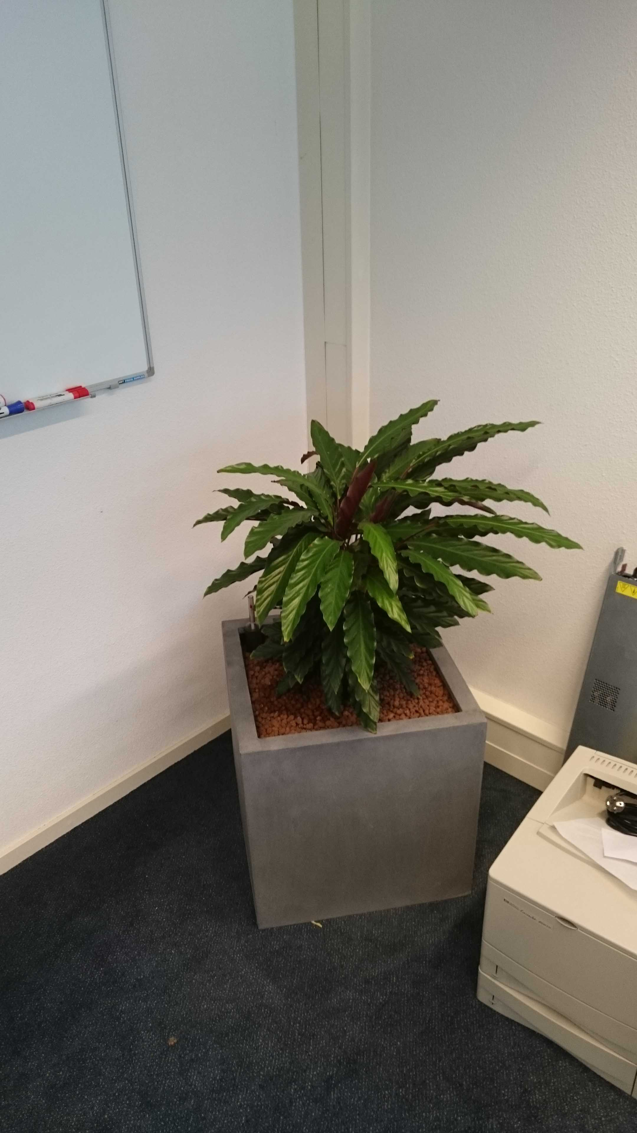 interieurbeplanting-a03